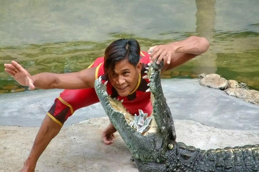 Elephant and Crocodile Show (Samphan)